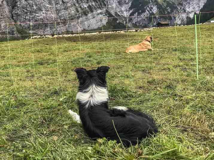 EWS - Sheep Herd Management -07008_