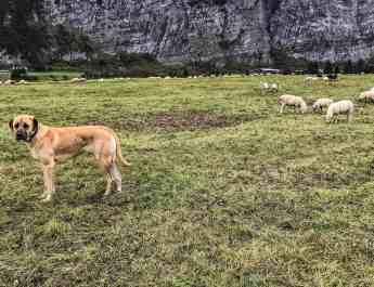 Livestock Protection - 7644.JPG - European Wilderness Society - CC NonCommercial-NoDerivates 4.0 International