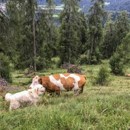 Livestock Protection - 7723.JPG - © European Wilderness Society CC BY-NC-ND 4.0