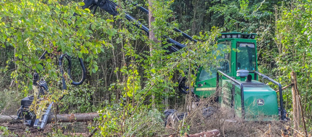 EU Court of Justice: Bialowieza Forest logging violates laws