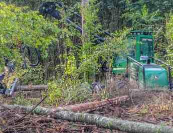 Bialowieza Logging - Artur Wiśniewski © All rights reserved