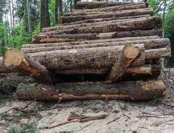 Bialowieza Logging - Radosław Ślusarczyk