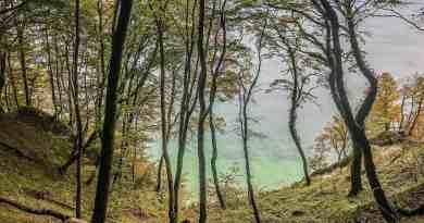 European-Beech-Forest-Network-Vilm-2017-0084.jpg - © European Wilderness Society CC BY-NC-ND 4.0