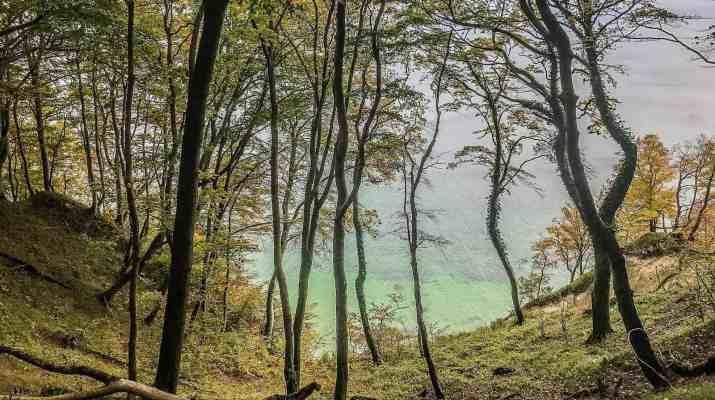 European-Beech-Forest-Network-Vilm-2017-0084.jpg - European Wilderness Society - CC NonCommercial-NoDerivates 4.0 International