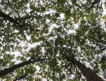 European Beech Forest Network Vilm 2017