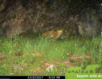 Gregor Louisoder Umweltstiftung Lynx