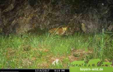 Alus_19_Mai_2017_©_Gregor_Louisoder_Umweltstiftung.jpg - © European Wilderness Society CC BY-NC-ND 4.0