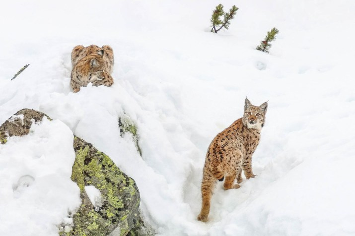 Slovakia wilderness