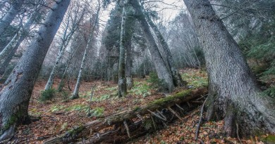 12. deadwood is another crucial forest element.jpg - © European Wilderness Society CC BY-NC-ND 4.0