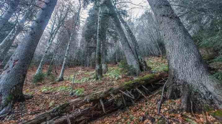 EWS - Komovi Mountain Montenegro -13086_