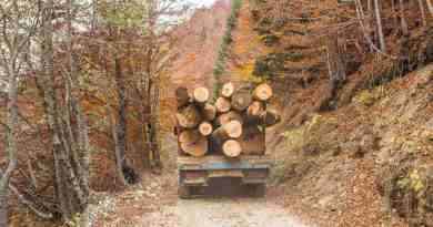 Deforestation in Europe increases