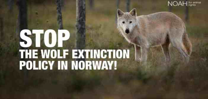 International protest against wolf killing in Norway