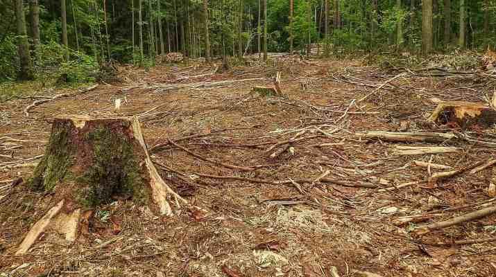Bialowieza Logging - Radosław Ślusarczyk - © All rights reserved