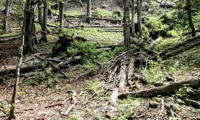 Kalkalpen Wilderness - © All rights reserved