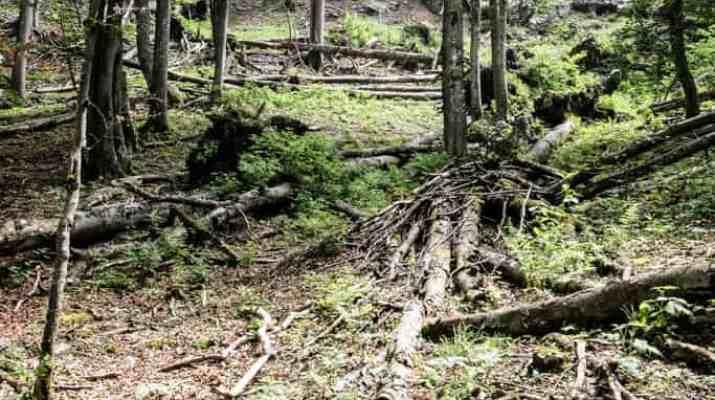 EWS - Kalkalpen Wilderness -01832_