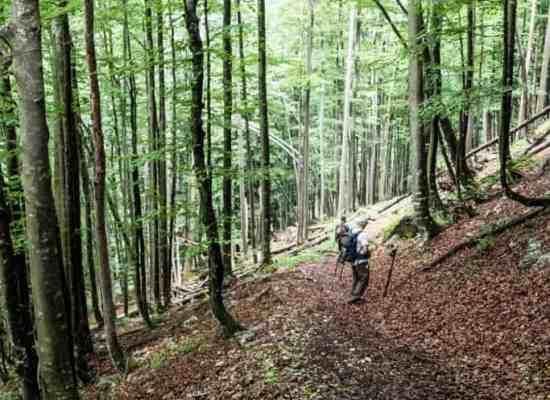Kalkalpen Wilderness