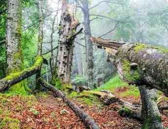 Buchenwald1_korr.jpg - European Wilderness Society  - CC NonCommercial-NoDerivates 4.0 International