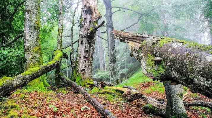Buchenwald1_korr.jpg - © European Wilderness Society CC BY-NC-ND 4.0