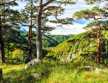 National Park Kalkalpen © NP KA © All rights reserved
