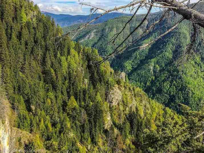 EWS - Plaul Vanata Wilderness Romania -10565_