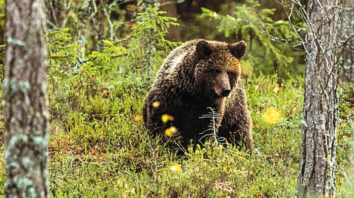 Bear © All rights reserved