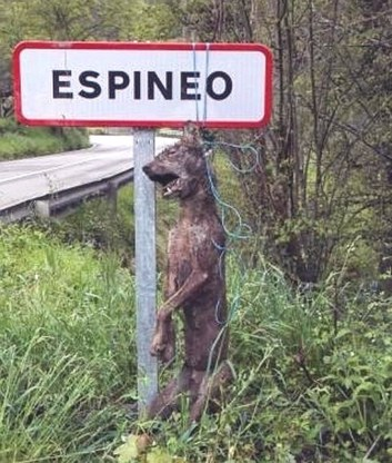 Wolf hunting Spain-14509