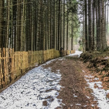 Bavarian National Park Sumava - © All rights reserved