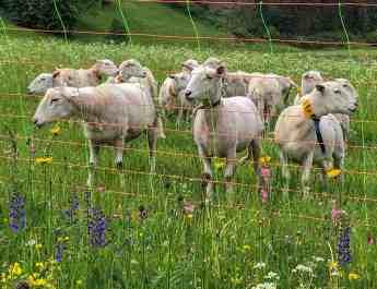 Herdenschutz Tirol