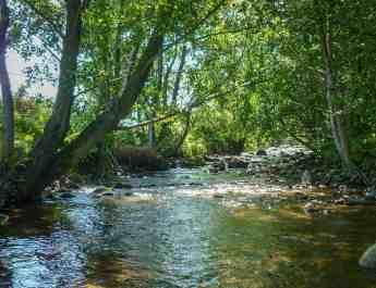 Raul Alb WILDRiver-16103.JPG - European Wilderness Society  - CC NonCommercial-NoDerivates 4.0 International