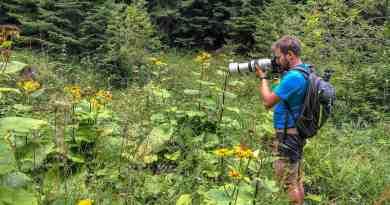 WILDArt Synevyr - 19140.jpg - © European Wilderness Society CC BY-NC-ND 4.0