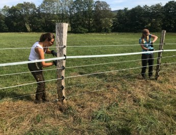 Livestock Protection Fencing-21656.HEIC - European Wilderness Society - CC NonCommercial-NoDerivates 4.0 International