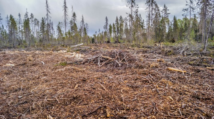 Archangelsk-21884.JPG - European Wilderness Society - CC NonCommercial-NoDerivates 4.0 International