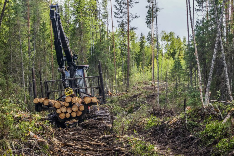 Archangelsk-21888.JPG - European Wilderness Society - CC NonCommercial-NoDerivates 4.0 International