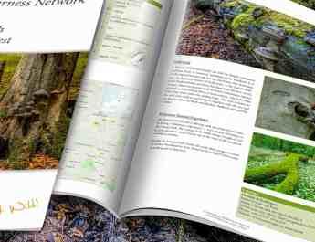 Hainich-WILDForest_Brief_2200x1057.jpg - European Wilderness Society - CC NonCommercial-NoDerivates 4.0 International
