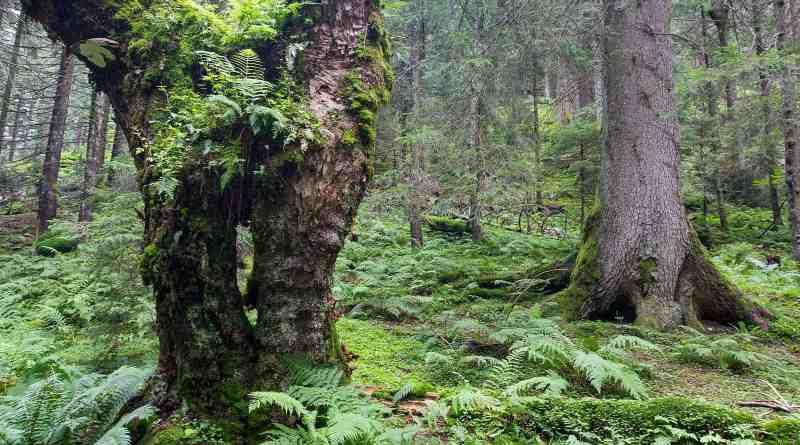 Fagras-22189.jpg - © European Wilderness Society CC BY-NC-ND 4.0