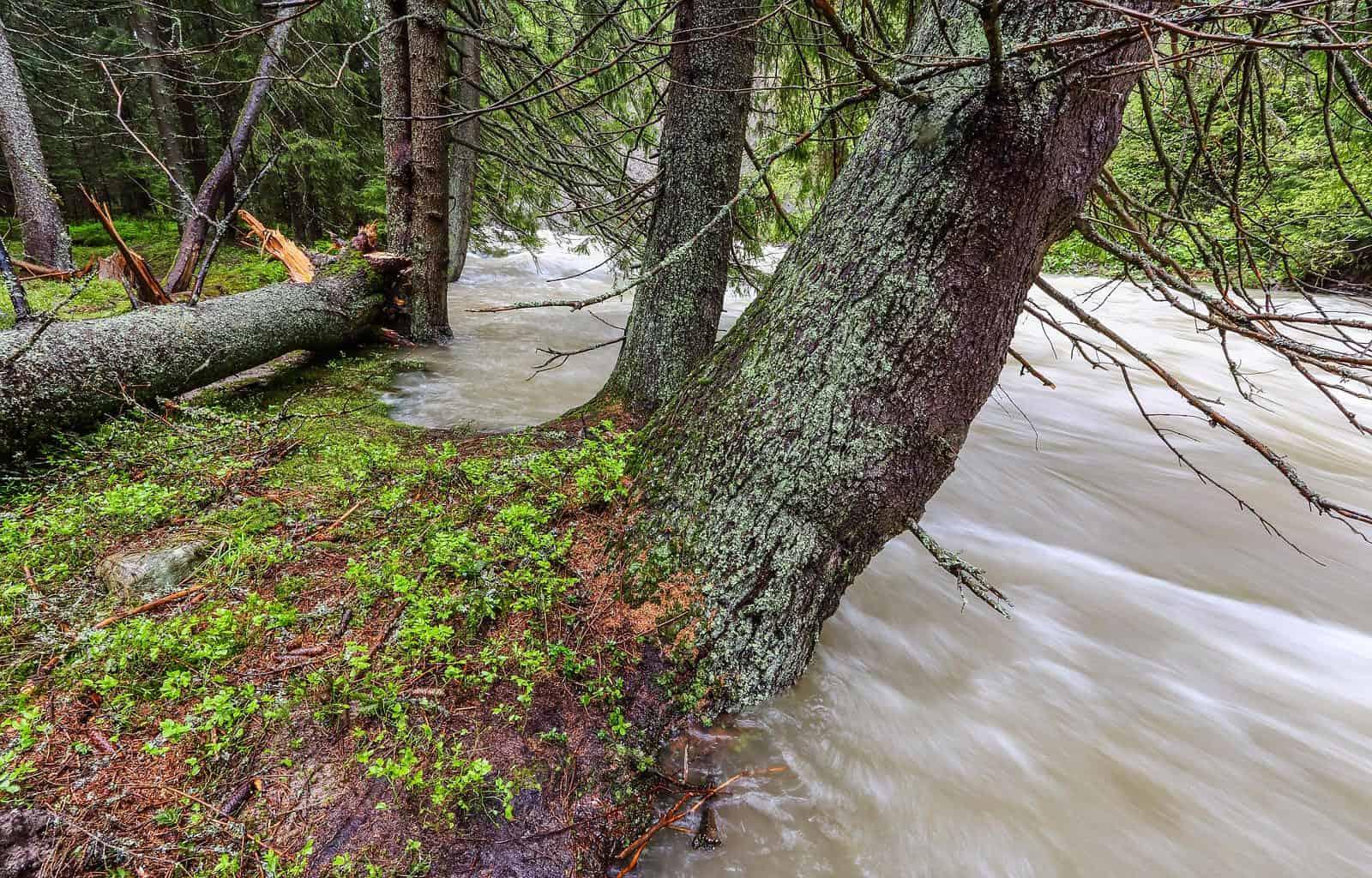 povode-na-belej_35152557585_o.jpg - European Wilderness Society  - CC NonCommercial-NoDerivates 4.0 International
