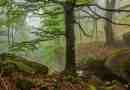 Central Balkan Wilderness - 72.jpg - © European Wilderness Society CC BY-NC-ND 4.0
