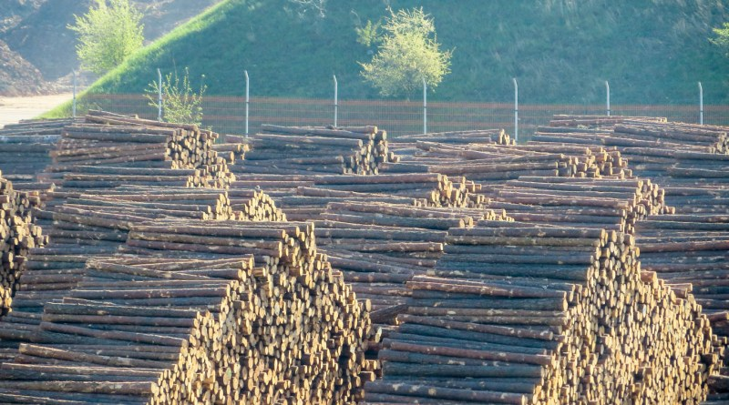 Deforestation Romania Hannes Knapp 0010.JPG - © European Wilderness Society CC BY-NC-ND 4.0