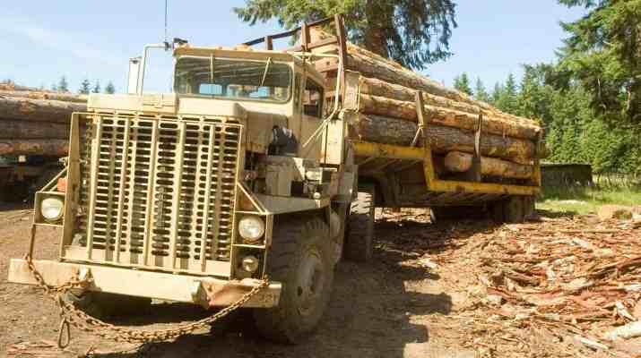 Deforestation Romania Hannes Knapp 0115.jpg - European Wilderness Society - CC NonCommercial-NoDerivates 4.0 International