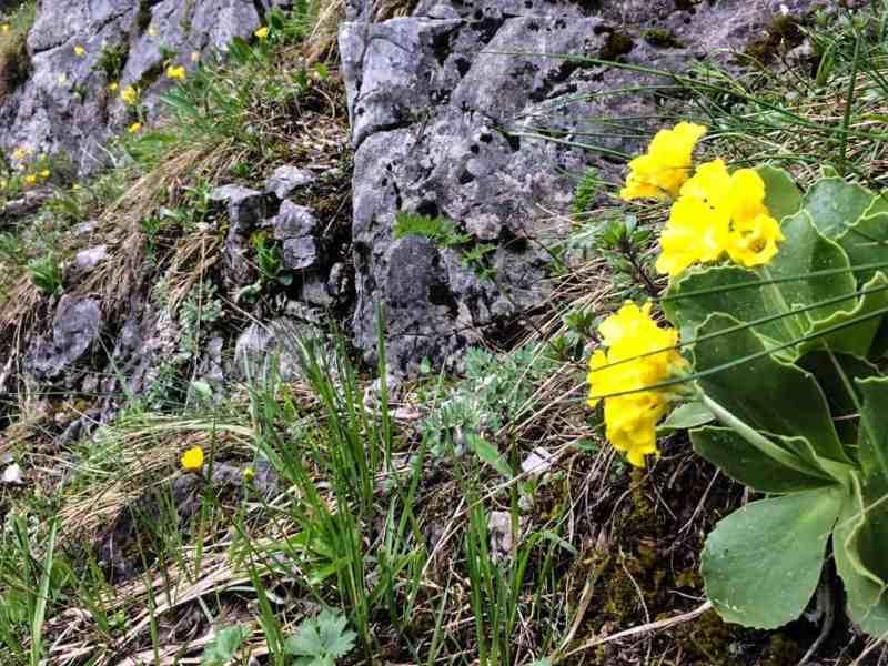 Dutch Film team in the Tatras, Slovakia 0017.jpg - © European Wilderness Society CC BY-NC-ND 4.0