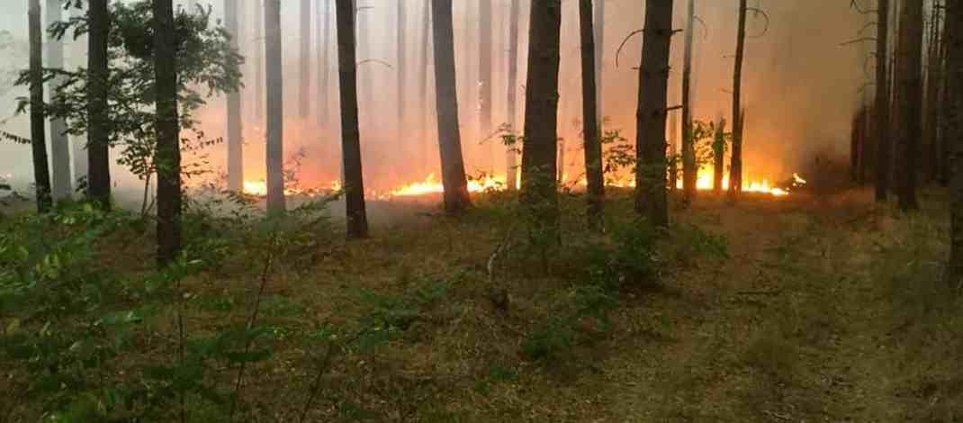 Forest Fire Treuebrietzen Brandenburg - © All rights reserved