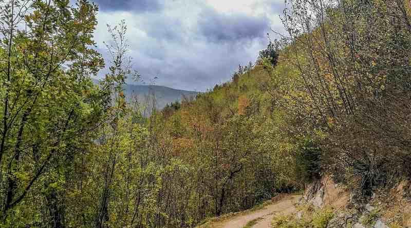 Italian Forest Fund-22607.jpg - © European Wilderness Society CC BY-NC-ND 4.0