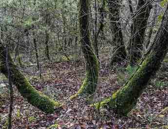 Italian Forest Fund-22613.jpg - European Wilderness Society - CC NonCommercial-NoDerivates 4.0 International
