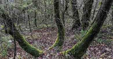 Italian Forest Fund-22613.jpg - © European Wilderness Society CC BY-NC-ND 4.0