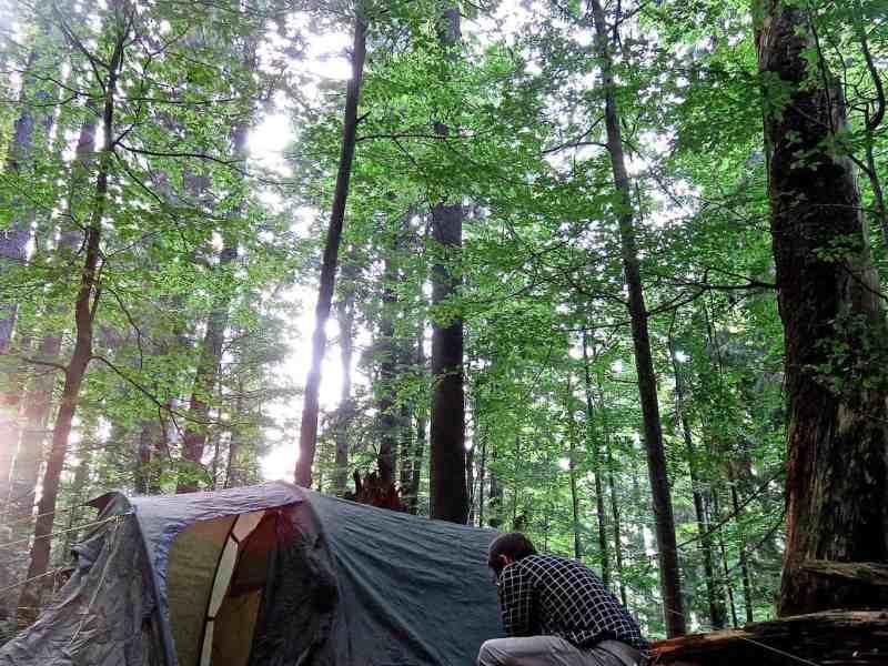 WILDArt Synevyr - 20694.jpg - © European Wilderness Society CC BY-NC-ND 4.0