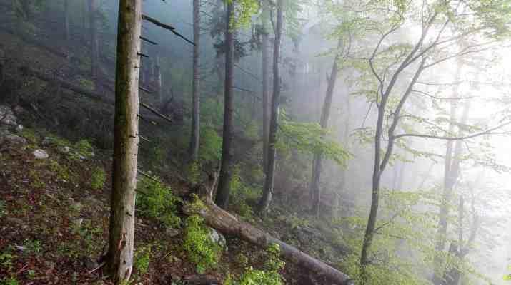 spring in fatra mountains-24748.jpg - European Wilderness Society - CC NonCommercial-NoDerivates 4.0 International