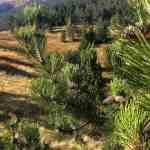 4 Ali Botush reserve-29841.jpeg - © European Wilderness Society CC BY-NC-ND 4.0