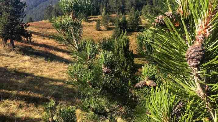 4 Ali Botush reserve-29841.jpeg - European Wilderness Society - CC NonCommercial-NoDerivates 4.0 International