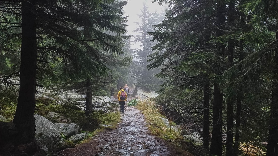 Bistrishko Branishte-30011.jpg - © European Wilderness Society CC BY-NC-ND 4.0