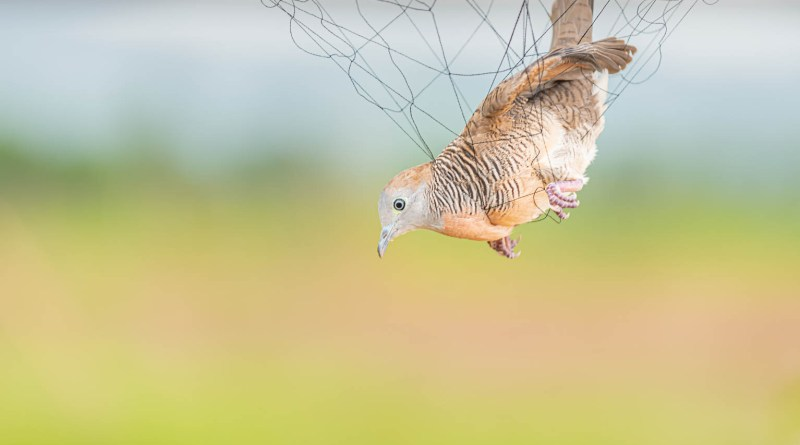 Dead Bird - Shutterstock -shutterstock_1478120399.jpg - © All Rights Reserved
